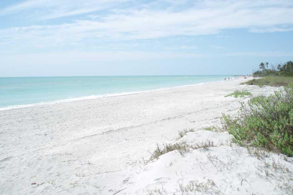 Sanibel Island Florida Beaches - clams en masse