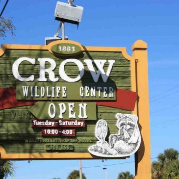 Crow Wildlife Center auf Sanibel Island