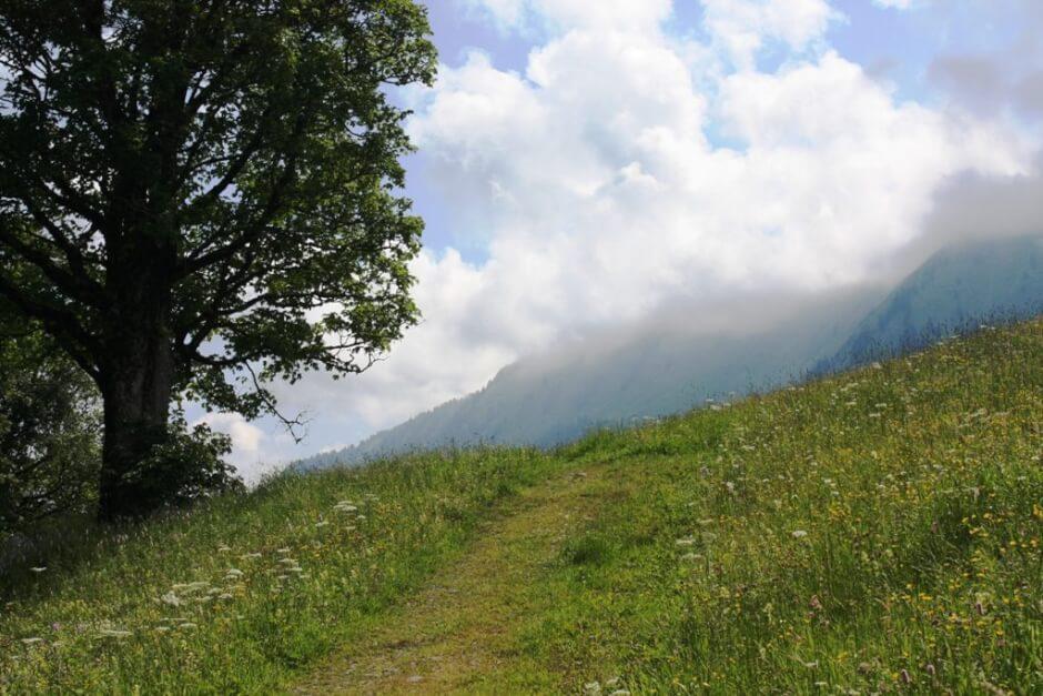 Bergwiesenweg