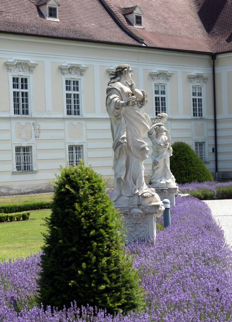 Lavender in Altenburg Abbey