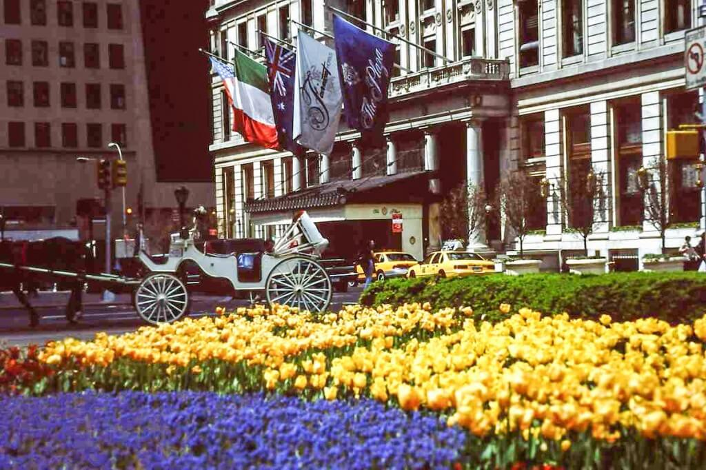 Frühling vor dem Plaza Hotel in New York in Manhattan