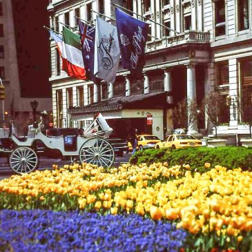 Spring in front of the Plaza Hotel in New York