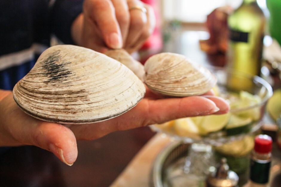 Das sind Quahogs Prince Edward Island Muscheln