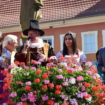What to drink in Volkach - The Volkacher councilor opens the grape harvest