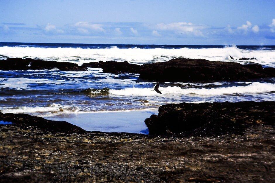 Reiher am Strand