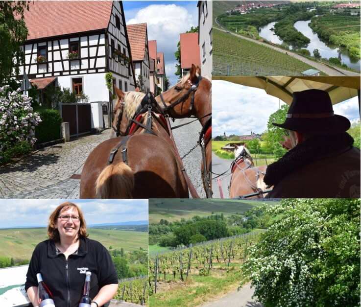 Carriage ride through the vineyards of Neuses a. Mountain in the Franconian wine region