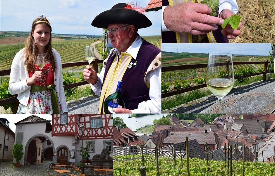 On the road in the Franconian wine region with the tithe count of Wipfeld
