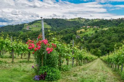 Wine-growing regions Austria vacation - enjoy the Sausal wine route