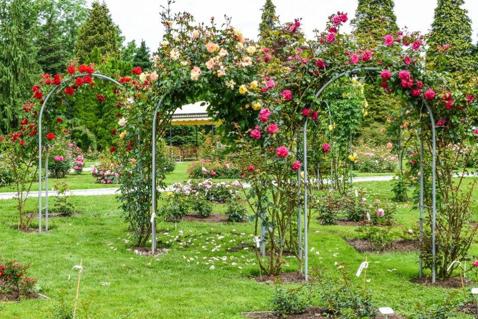Rose garden in Volcji Potok