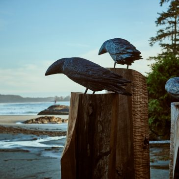 Chesterman Beach Ravens Michael Becker