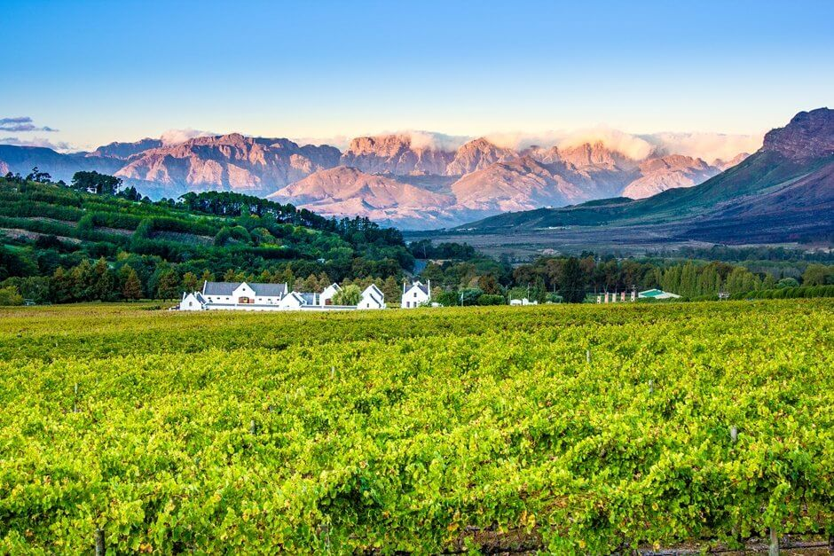 Stellenbosch winery, one of the wine farms in South Africa