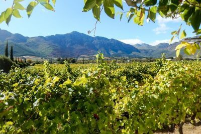 Wineries in South Africa