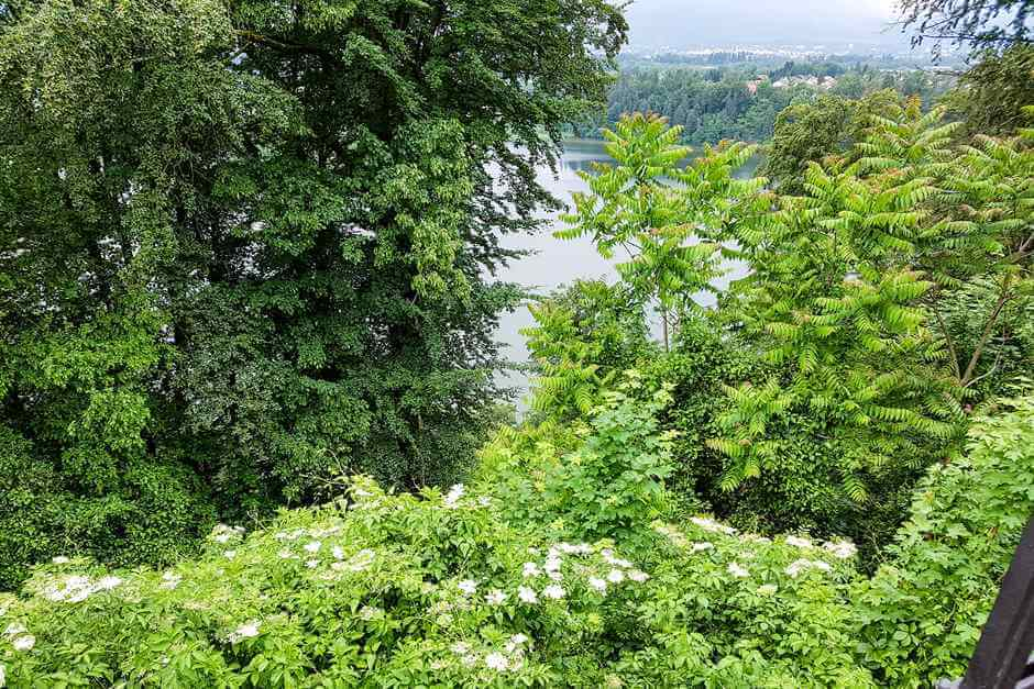 Enjoy nature with a view of the Drava Loop and elderberry