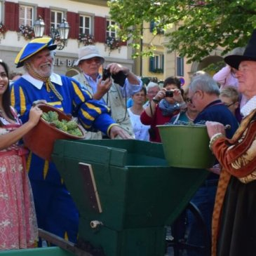 Landsknecht, councilor and wine prinzession from Volkach press the first grapes