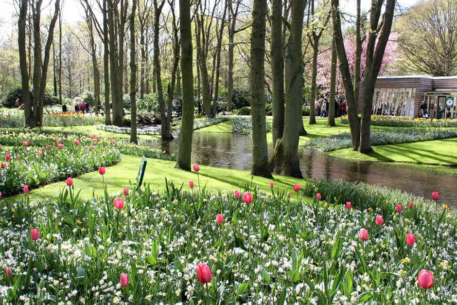 A walk in the tulip park is a way to enjoy the beautiful days in the spring