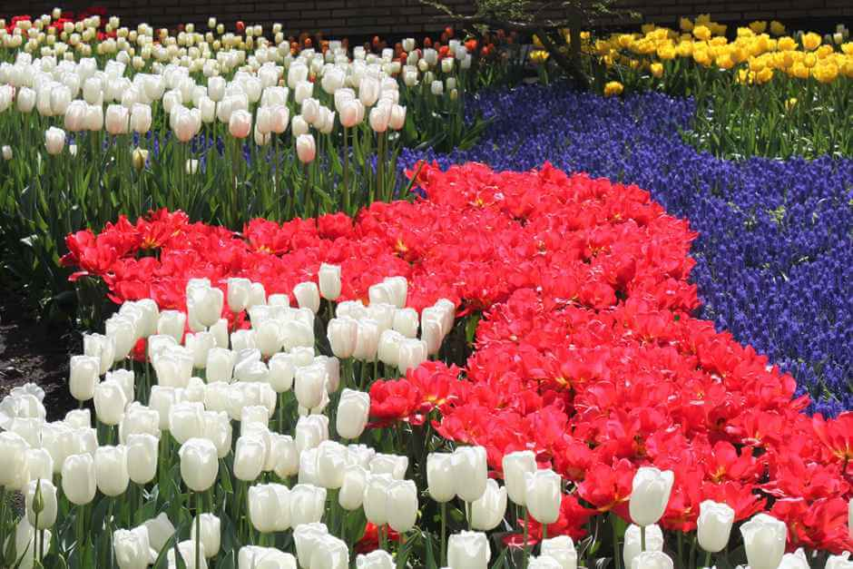 Tulips in all shapes and colors make a visit to the Keukenhof so interesting