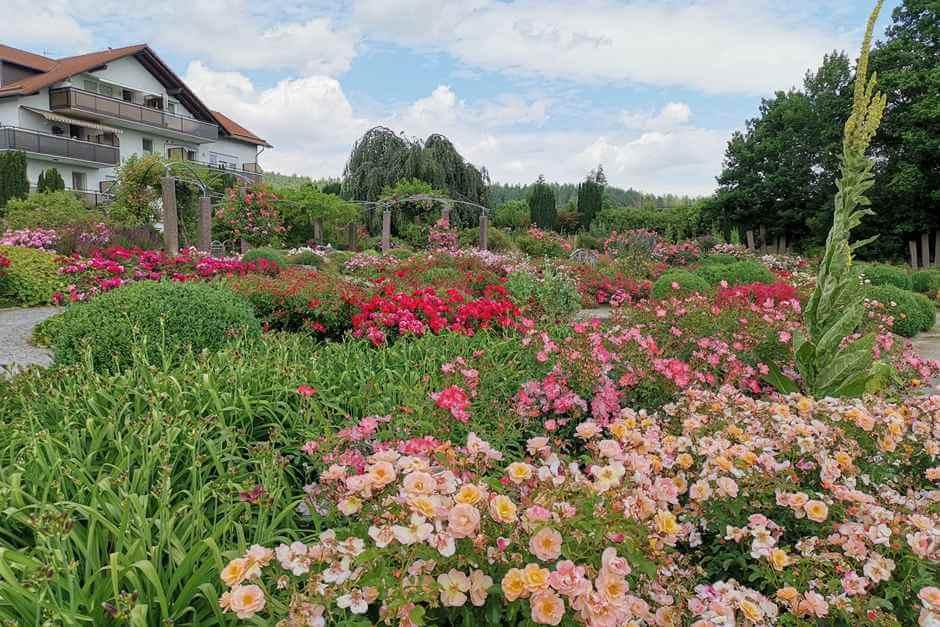 Die Rosen pflegen Freiwillige aus Bad Emstal